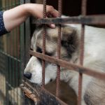 Proposed increase in sentences available for animal cruelty offences