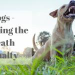 Dogs – Avoiding a Death Penalty